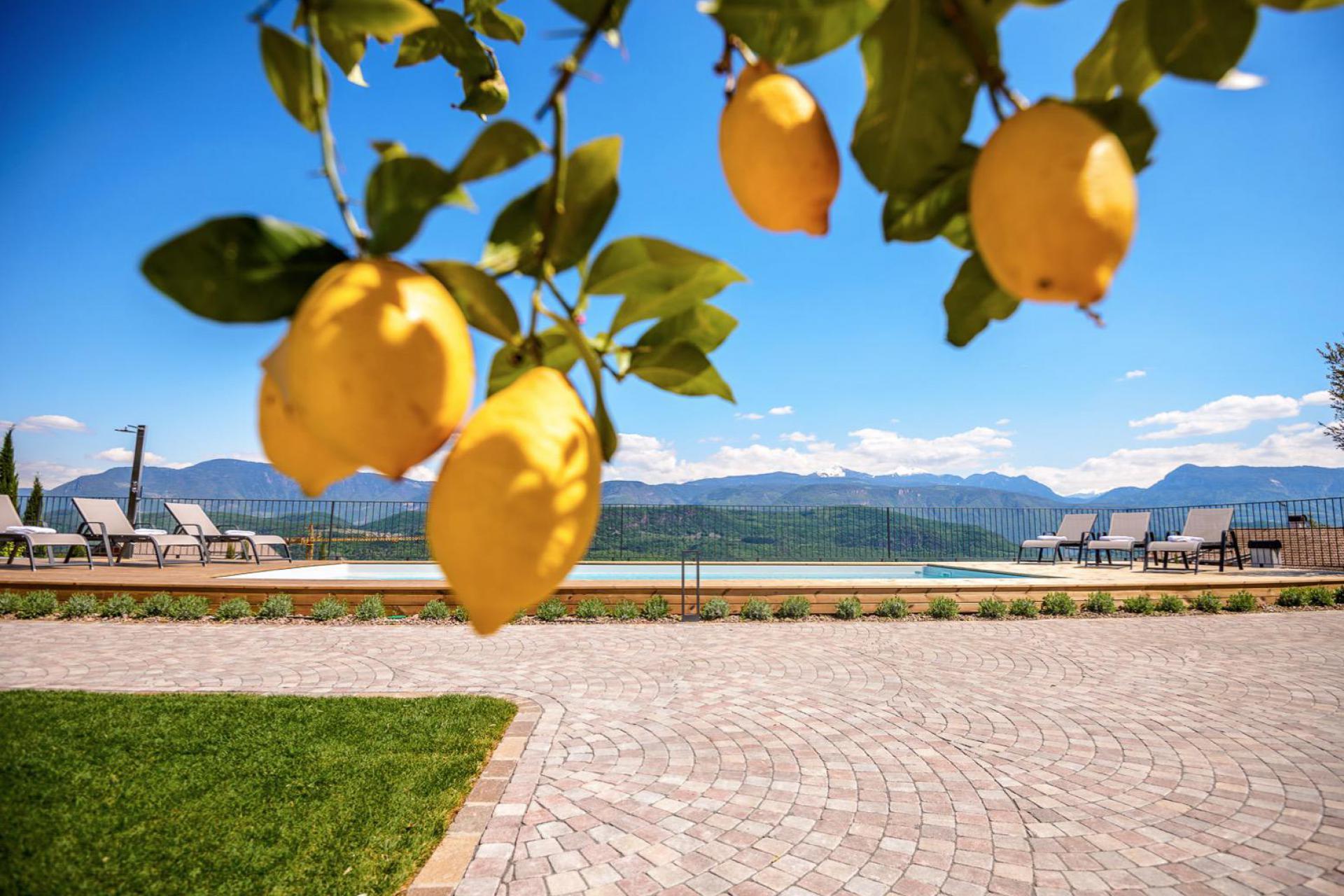 Agriturismo Dolomiti Accogliente agriturismo tra meli e vigneti