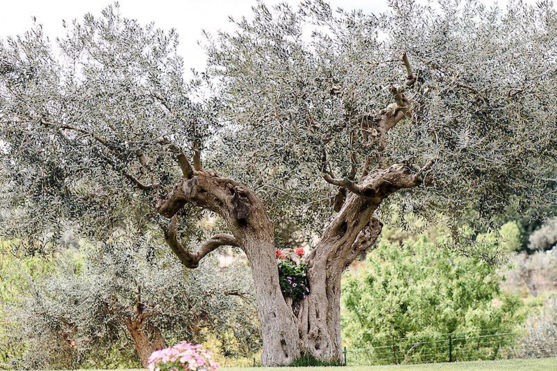 Agriturismo Sicilia Agriturismo accogliente nascosto tra mandorli e ulivi