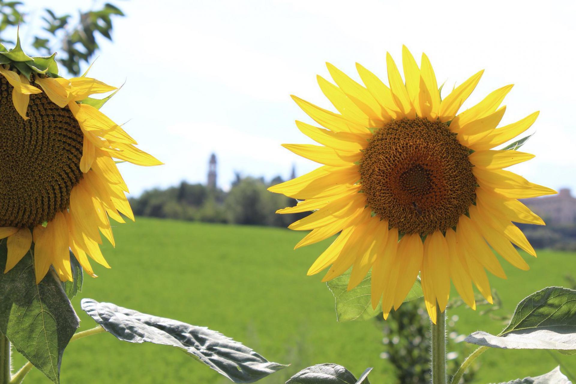 Agriturismo Marche Agriturismo accogliente vicino ad un paese nelle Marche