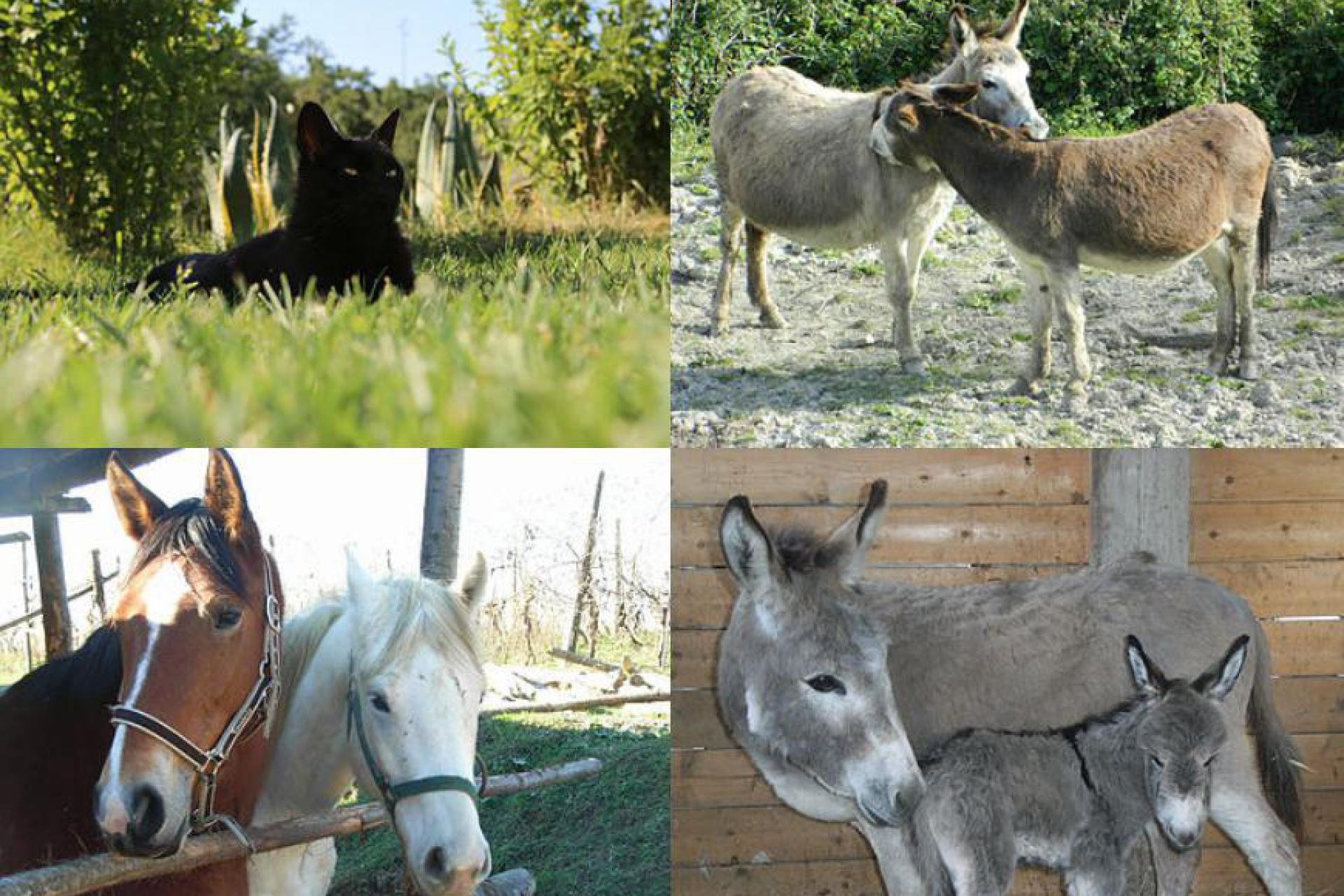Agriturismo Piemonte Agriturismo nel cuore del Piemonte puro relax
