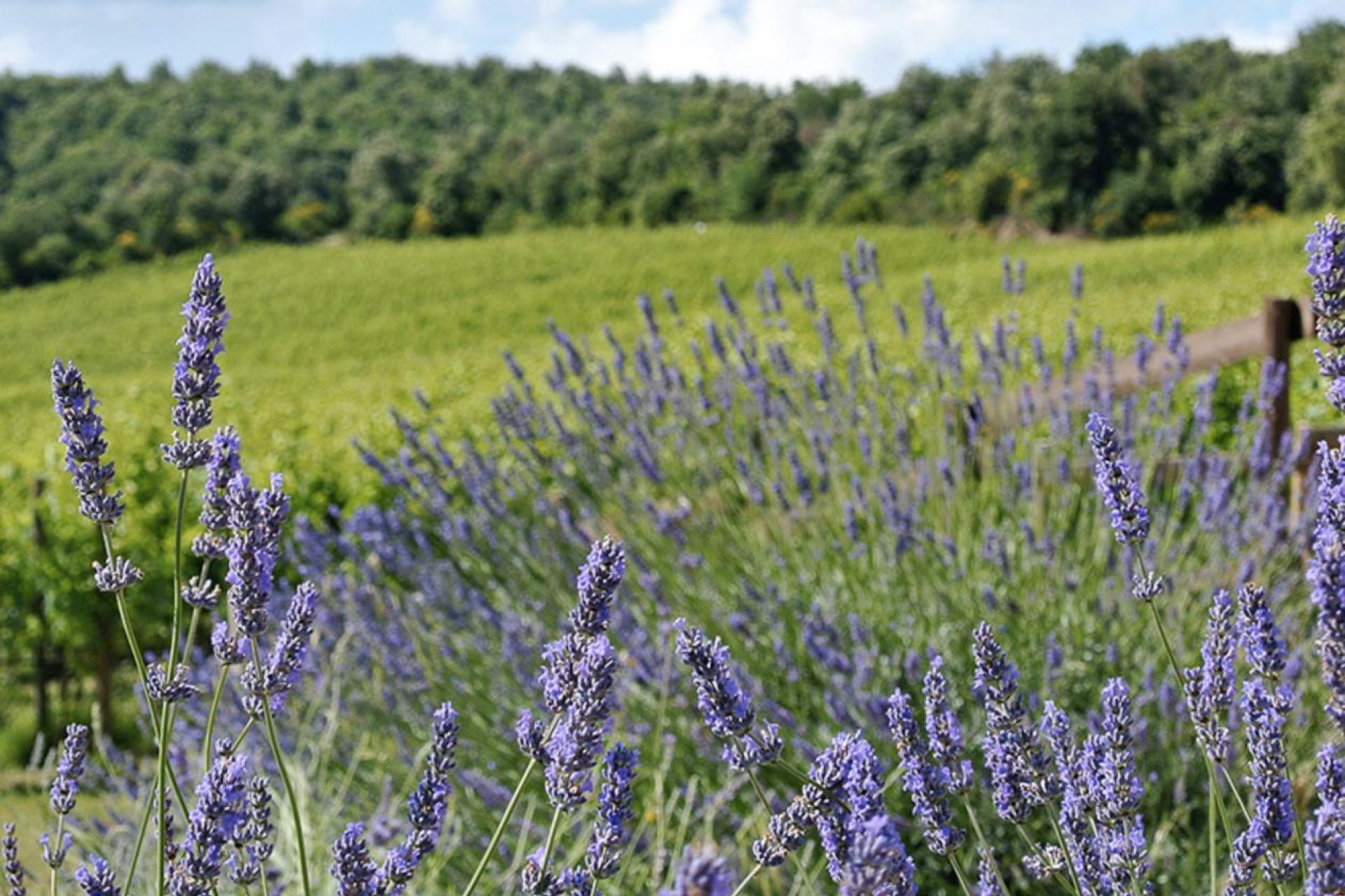 Agriturismo Toscana Agriturismo tra i vigneti a sud di Siena