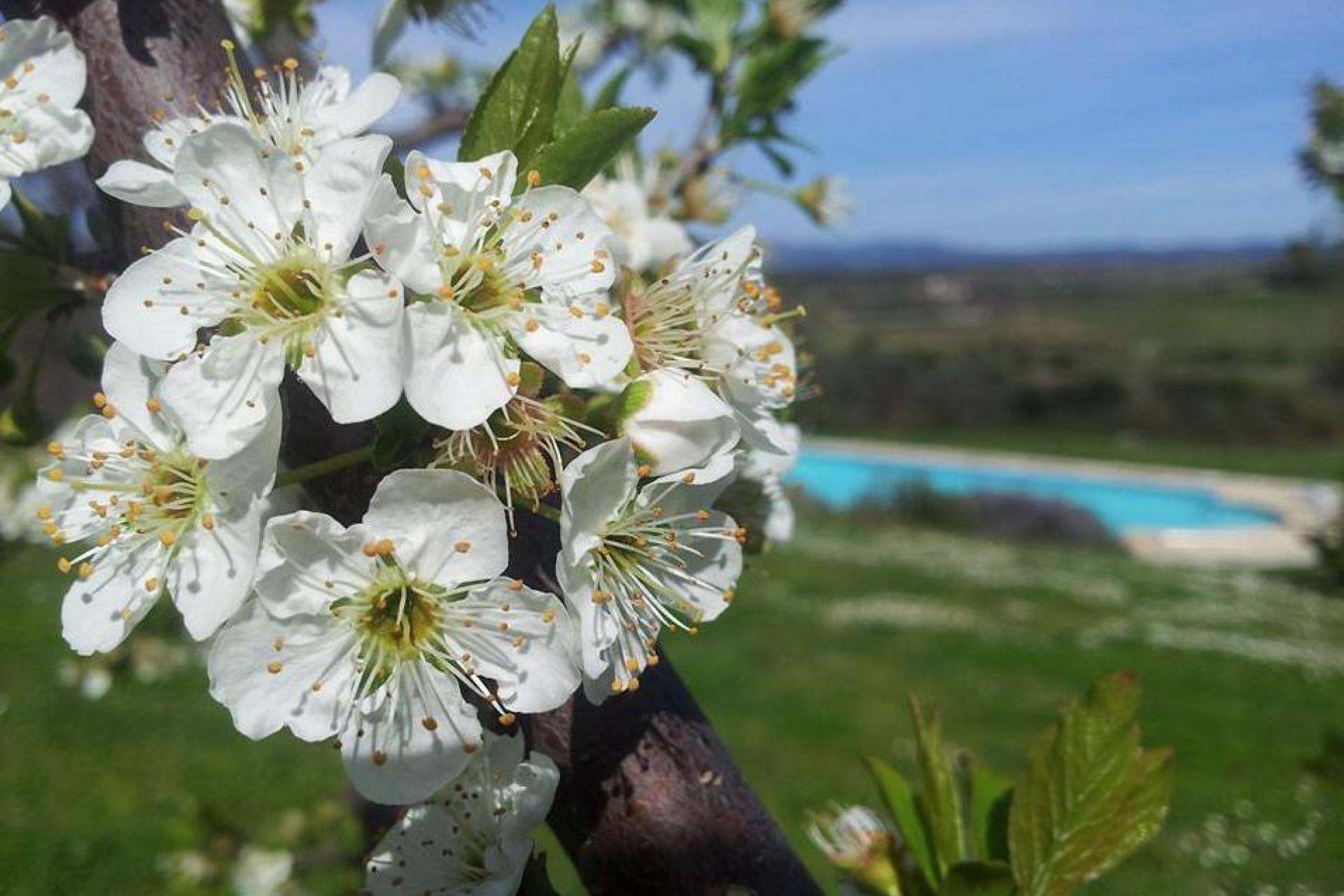 Agriturismo Toscana Agriturismo tranquillo tra olivi vicino al mare, Toscana