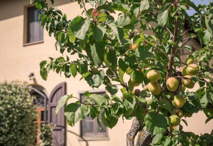 Agriturismo Toscana in uliveto con vista mozzafiato