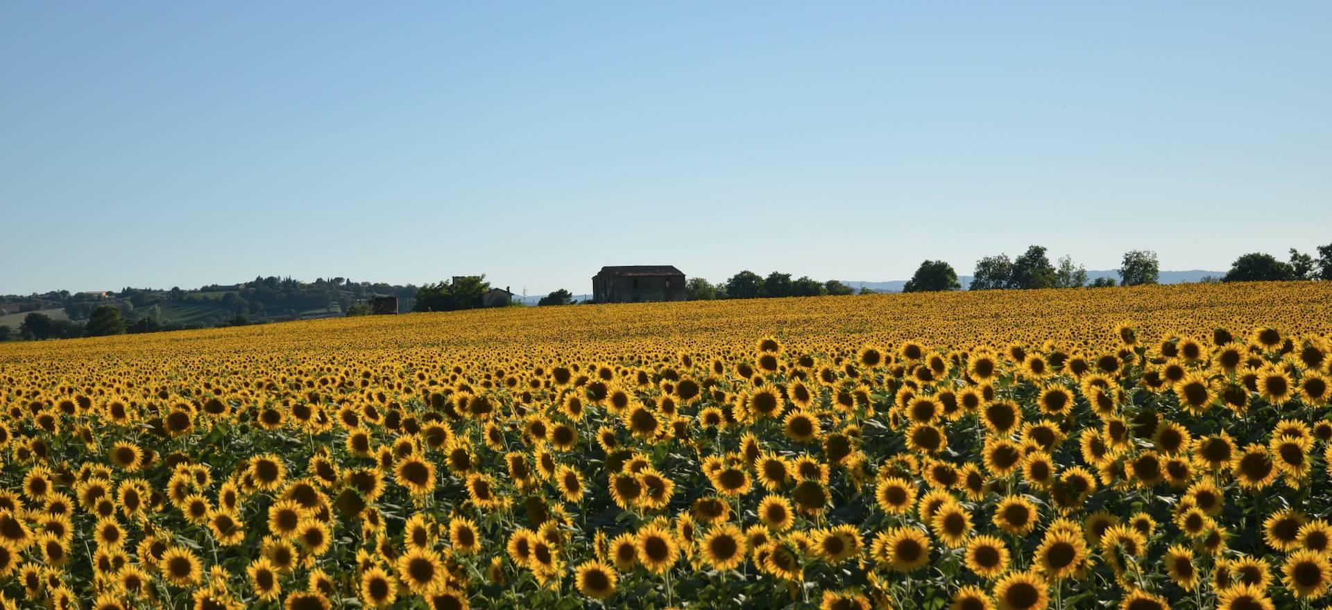 Agriturismo Toscana Agriturismo accogliente vicino a Cortona