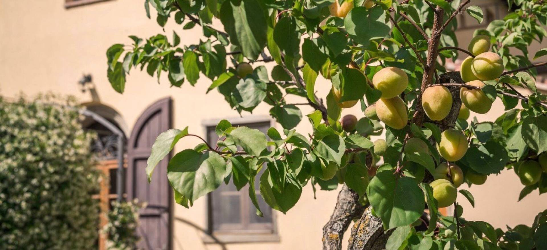 Agriturismo Toscana Agriturismo comodo nel Chianti, vicino Firenze