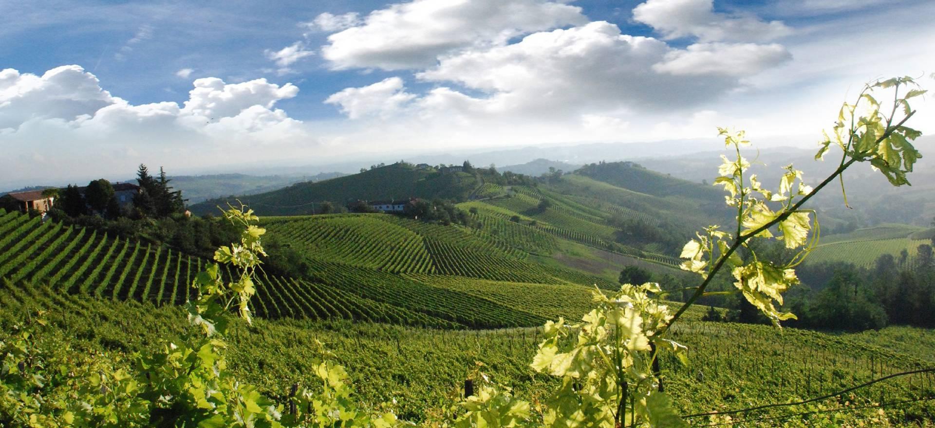 Agriturismo Piemonte Agriturismo e cantina sulle colline piemontesi