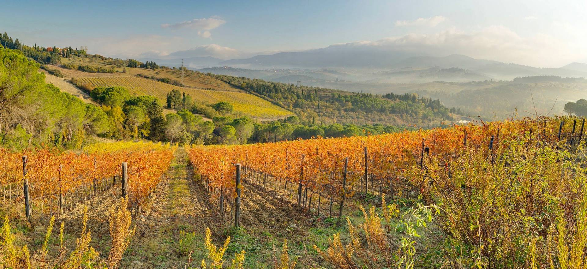 Agriturismo Toscana Agriturismo tra vigneti vicino a Firenze, Toscana