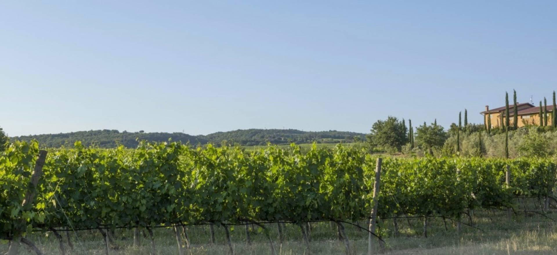 Agriturismo Toscana Bellissimo agriturismo vicino a Montalcino
