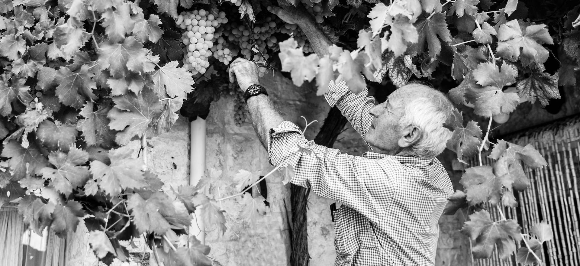 Agriturismo Puglia Ospitalità Pugliese in splendida trulli
